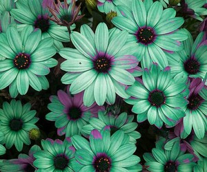 flowers, green, and purple image