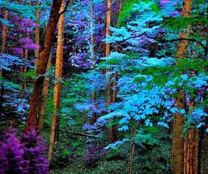 nature, blue, and tree image
