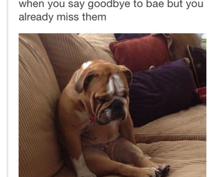 bae, dogs, and tumblr image