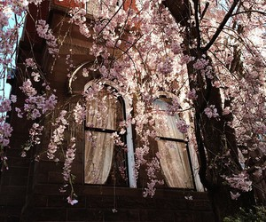 blossom, cherry, and flowers image