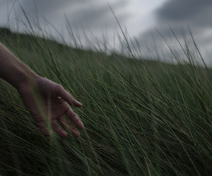 nature, hand, and grass image
