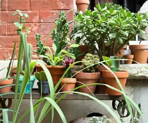 backyard, green, and home image