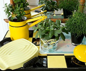 cool, plants, and yellow image