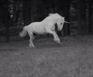 unicorn, black and white, and magic image