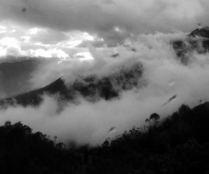 black and white, clouds, and forrest image