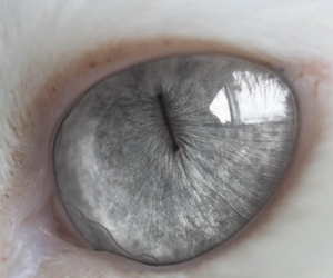 cat, eye, and eyes image