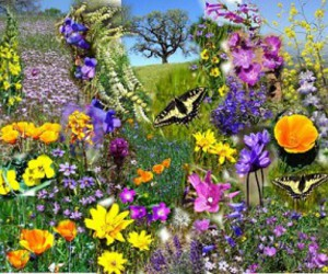 alive, spring, and butterflies image