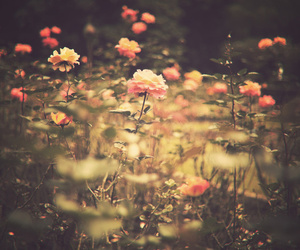 floral, pink flowers, and spring image