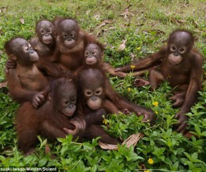 animals, cute, and apes image