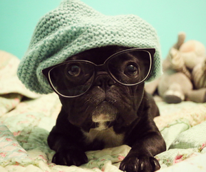 frenchie, bulldogfrances, and love image