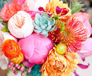 flowers, pink, and colorful image
