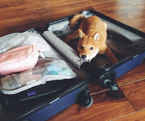 dog, puppy, and suitcase image