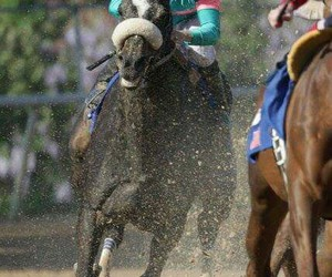 horse, race, and spirit image