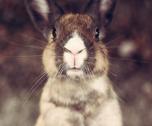 bunny, animals, and rabbit image