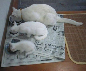 best friend, so sweet, and white cat image