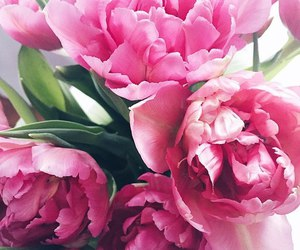 flowers, background, and peonies image