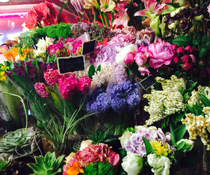 colorful, flowers, and new york image