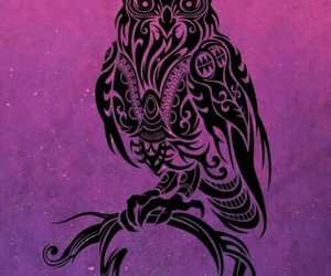 owl and cool image