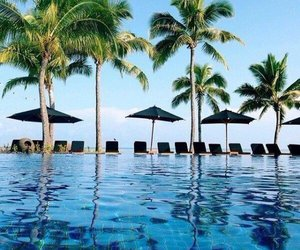 pool, palm trees, and palms image