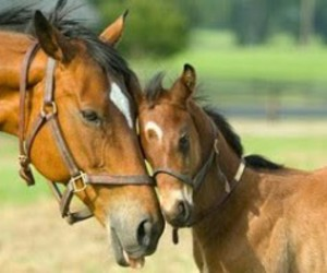 horse and foal image