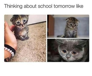 cat, me, and school image