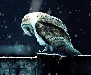 owl, snow, and winter image