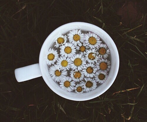 flowers, cup, and grunge image