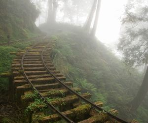 forest, road, and train image