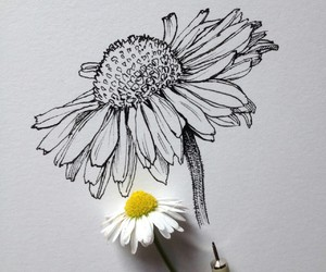 draw, drawings, and flower image