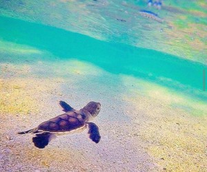turtle and beautiful image
