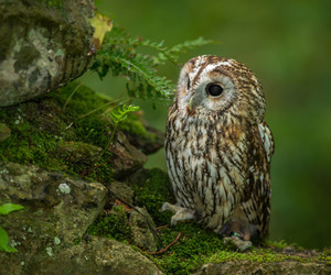 owl, nature, and animal image
