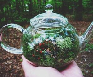 nature, green, and tea image