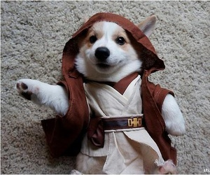 dog, jedi, and puppy image