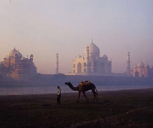 camel, india, and beautiful image