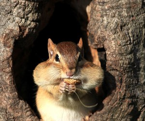 chipmunk and cute image