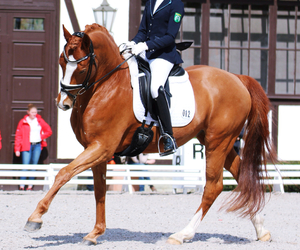 beautiful, dressage, and horse image