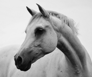 beautiful, black, and equestrian image