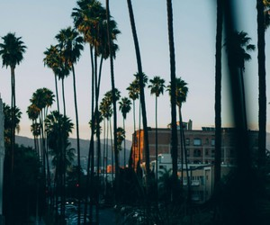 california, palms, and summer image