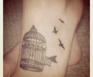 bird, foot, and birdcage image