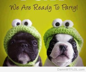 chiens, party, and tgif image