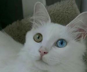 cat, animal, and beautiful image