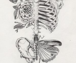 skeleton, flowers, and drawing image