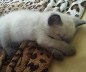 baby, gray, and kitten image