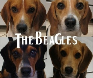 beagle, dog, and the beatles image
