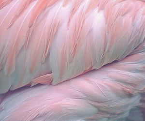 feathers, pink, and pretty image