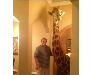 giraffe and life goals image