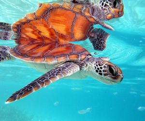 animals, sea animals, and ocean image