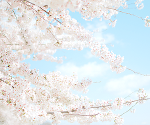 nature, pastel, and spring image