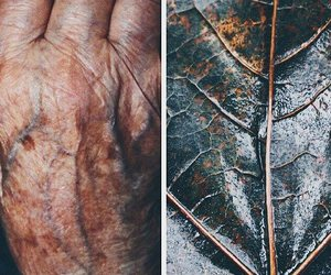 old, hand, and nature image