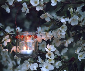 flowers, light, and candle image